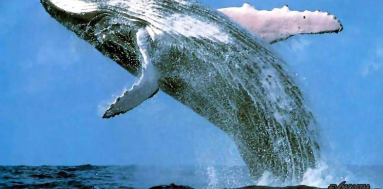Exmouth Diving Centre: Gulf Humpback Whale Watching Sunset Tour
