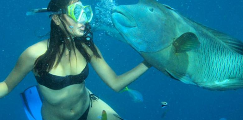 Calypso Reef Charters: 1 day Snorkel Trip + 2 Certified dives (Full Gear Hire)