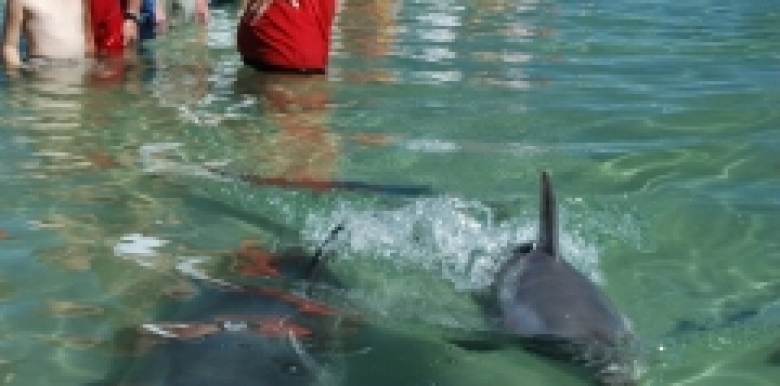 Dolphin Discovery Centre: Entry » Experiencebackpacking